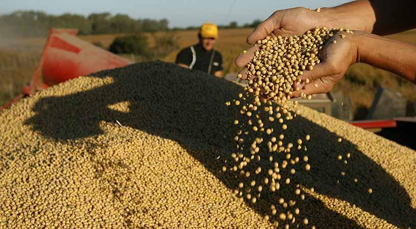 Avalan+reformas+para+apoyar+a+empresas+nacionales+productoras+de+semillas