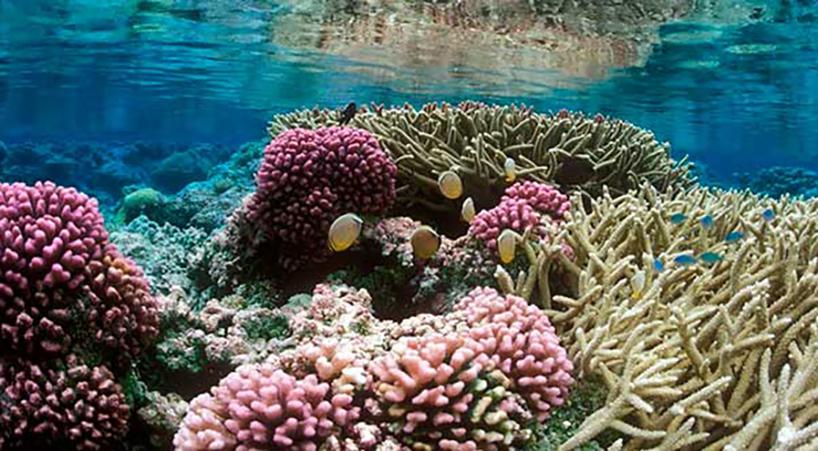 Impulsan+senadores+protecci%C3%B3n+de+arrecifes