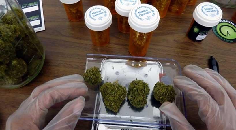 Senado+analizar%C3%A1+ley+para+regular+los+diversos+usos+de+la+Cannabis