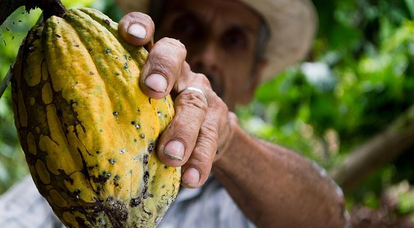 Declaran+el+2+de+septiembre+como+%E2%80%9CD%C3%ADa+Nacional+del+Cacao+y+Chocolate%E2%80%9D