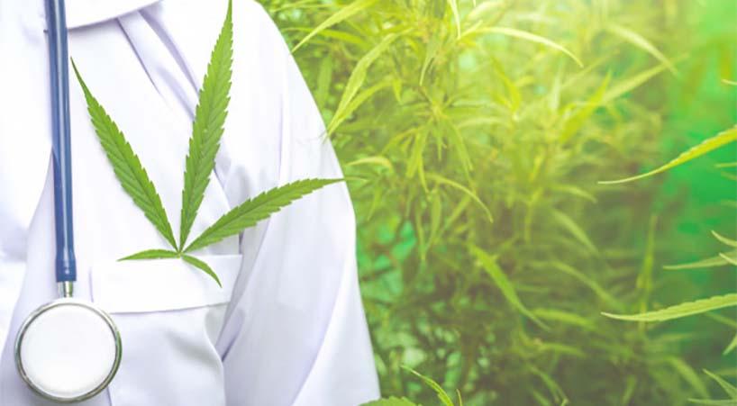 Turnan+a+Comisiones+dictamen+que+expide+la+Ley+para+la+Regulaci%C3%B3n+del+Cannabis+
