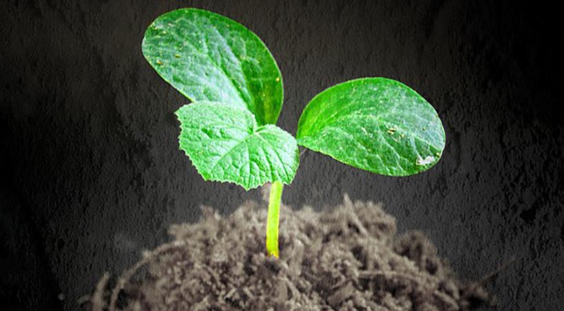 Expiden+diputados+nueva+Ley+General+de+Desarrollo+Forestal+Sustentable