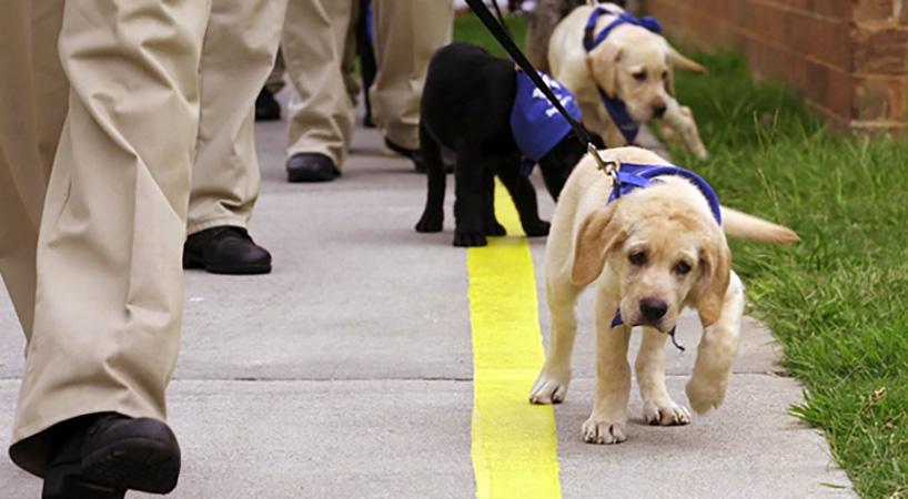 Proponen+ley+de+derechos+de+usuarios+de+perros+gu%C3%ADa++