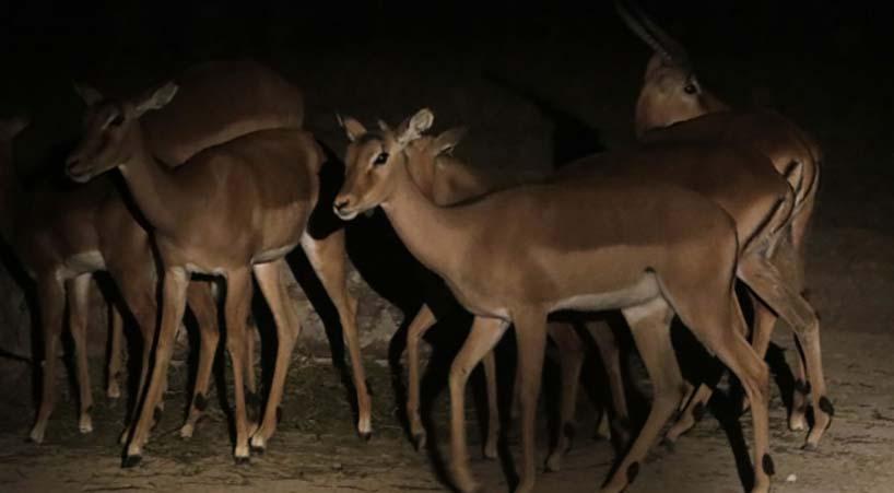 Garantizan+protecci%C3%B3n+a+especies+de+vida+silvestre++