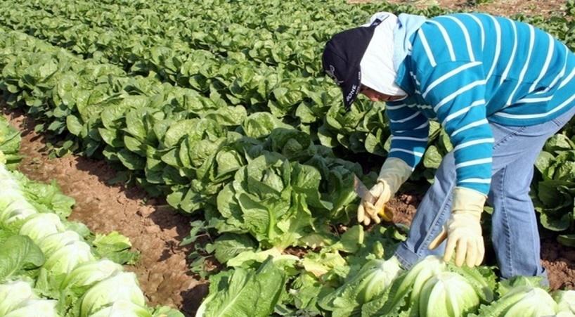 Analizan+alcances+de+sectores+agroalimentario+y+ganadero+en+el+TPP