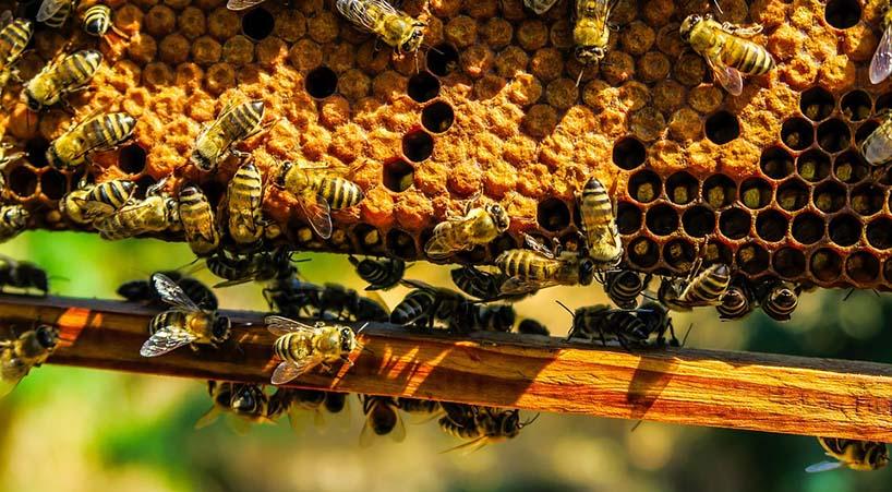Aprueban+exhorto+para+preservar+la+vida+de+las+abejas