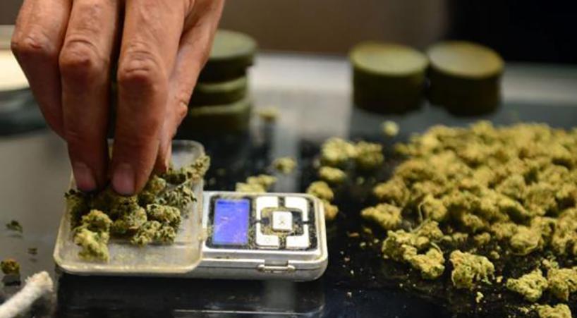 Congreso+aprueba+uso+medicinal+de+la+marihuana