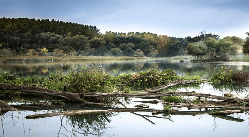 En+C%C3%A1mara+Baja+se+analiza+el+agua%2C+bosques+y+biodiversidad+en+M%C3%A9xico