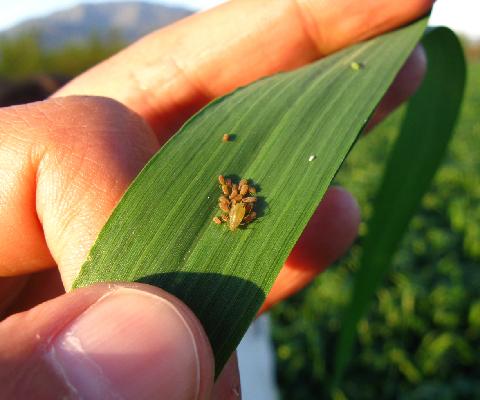 Exhorta+la+Permanente+a+intensificar+medidas+contra+plagas+agr%C3%ADcolas+en+Michoac%C3%A1n